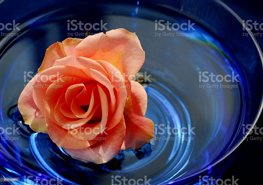 Rose in water royalty-free stock photo