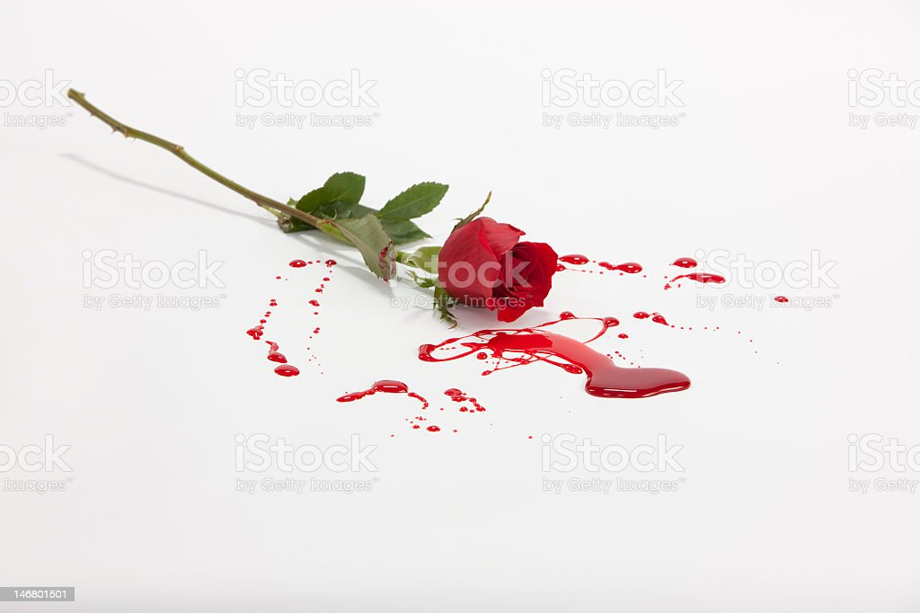 A rose laying in a pile of blood stock photo