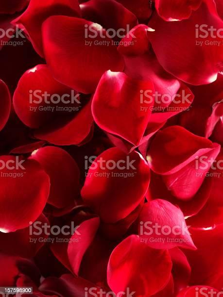 Rose leaf picture id157598900?b=1&k=6&m=157598900&s=612x612&h=si0hmihs0qzidqrapw3y6uwq5ha8oqwgzzimu2xf23g=