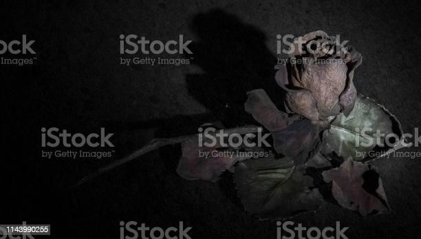 Rose mourning closeup picture id1143990255?b=1&k=6&m=1143990255&s=612x612&h=m5xiwzthmiqdcwehphyu6hdhufpbfjgkghb3gv trf8=