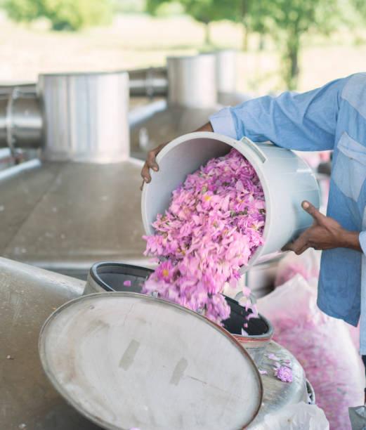 rosen-öl-extraktion mit technologie, rosa stieg auf um rosen-öl zu extrahieren. maschine, damascena rosen herein - destillationsturm stock-fotos und bilder