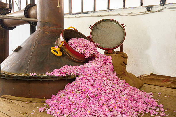 Rose Oil Production stock photo