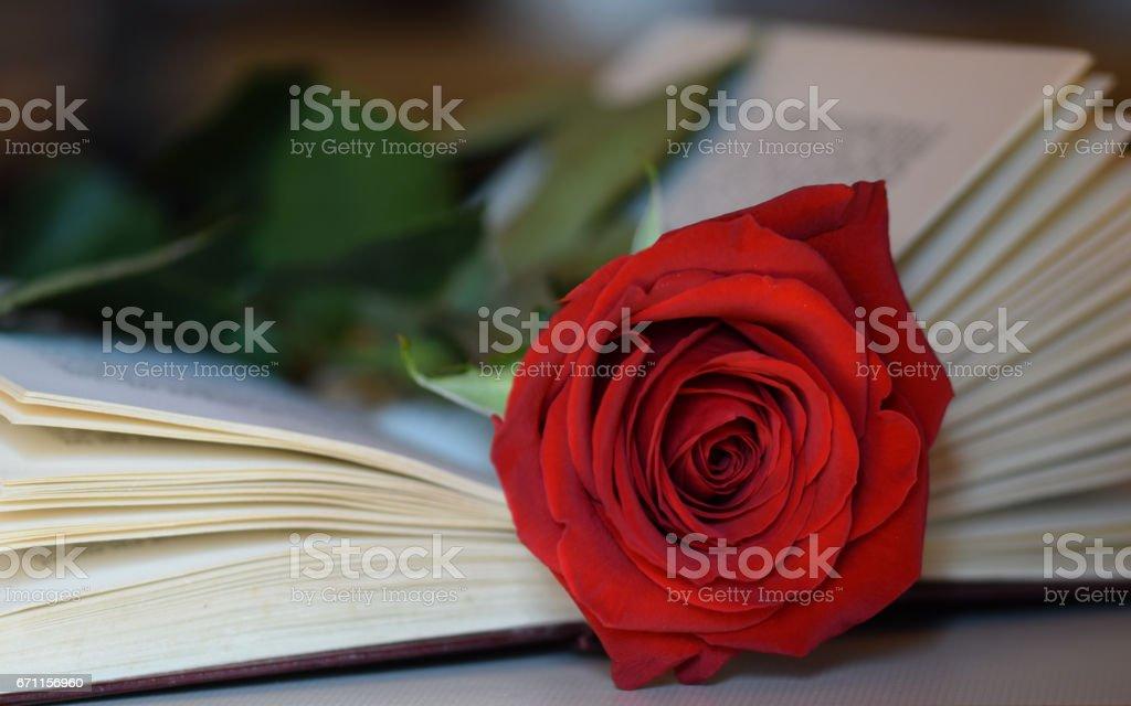 rose on a book  at Sant Jordi books festival stock photo
