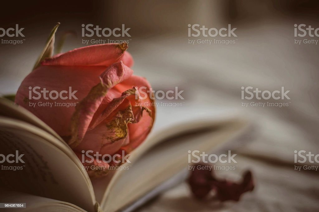 rose on a books - Royalty-free Backgrounds Stock Photo