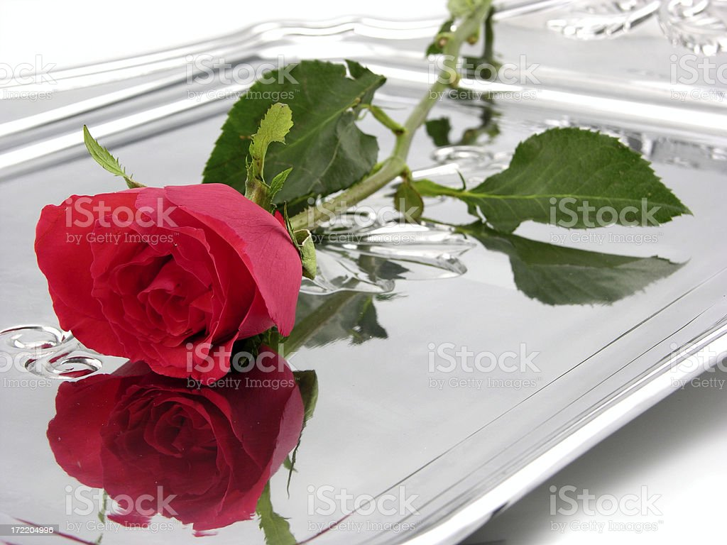 Rose on a platter royalty-free stock photo