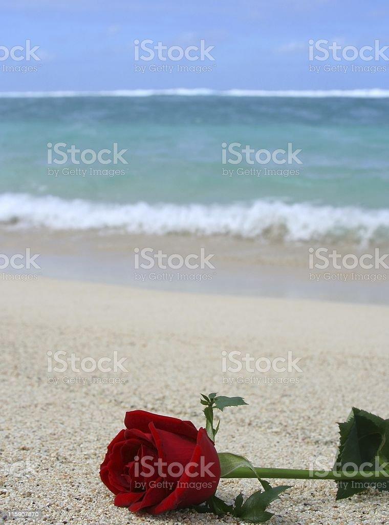 Rose on beach stock photo