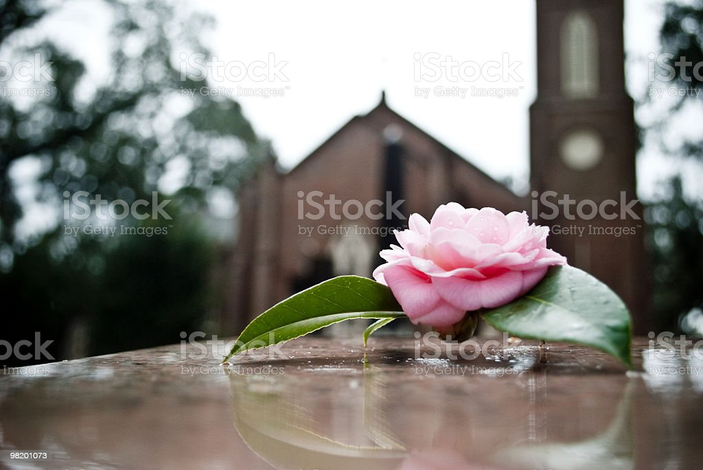 Rose on grave stock photo