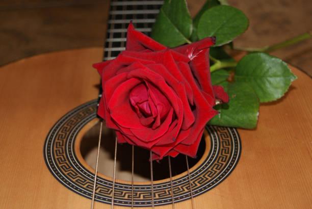 Rose på gitarr bildbanksfoto