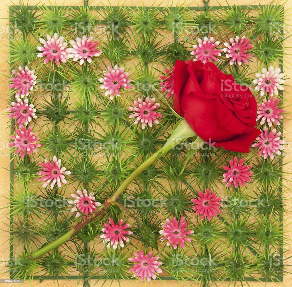 rose on heart shape symbol royalty-free stock photo