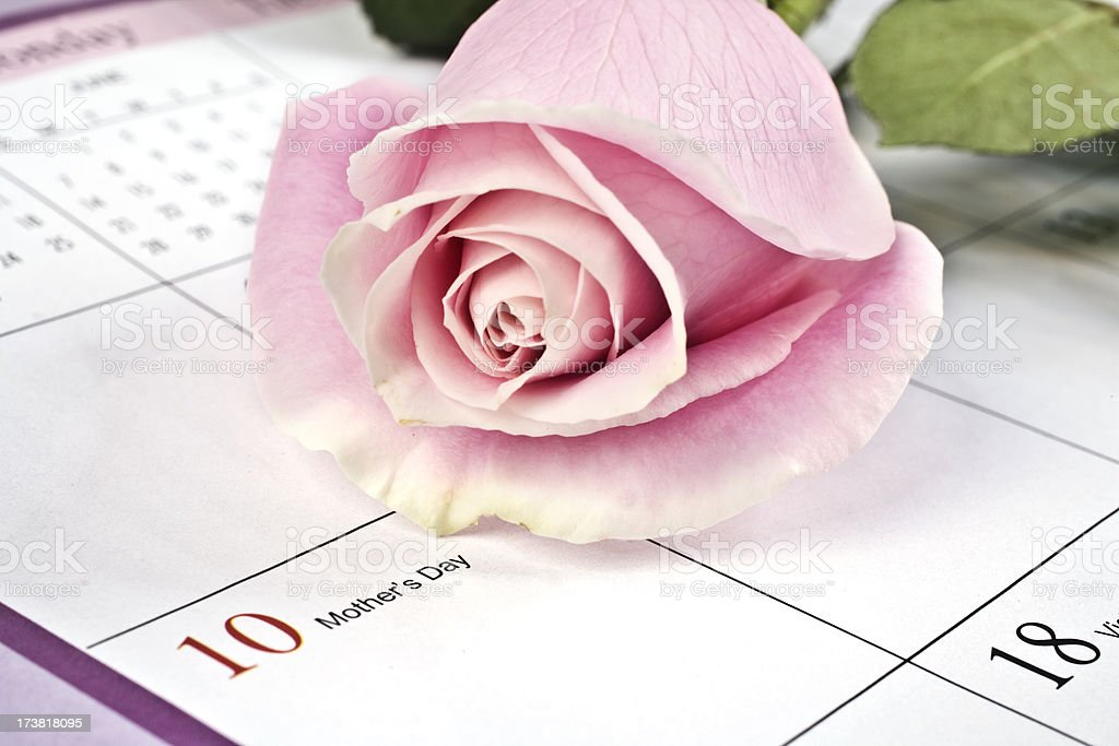 rose on mothers day royalty-free stock photo