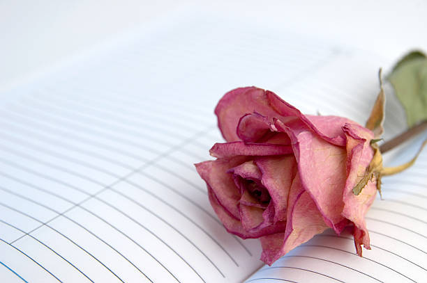 Rose on notebook picture id123081227?b=1&k=6&m=123081227&s=612x612&w=0&h=qtdm0kxrozfb4k5o7 wvxwpb k rhs2mtup nqcepti=