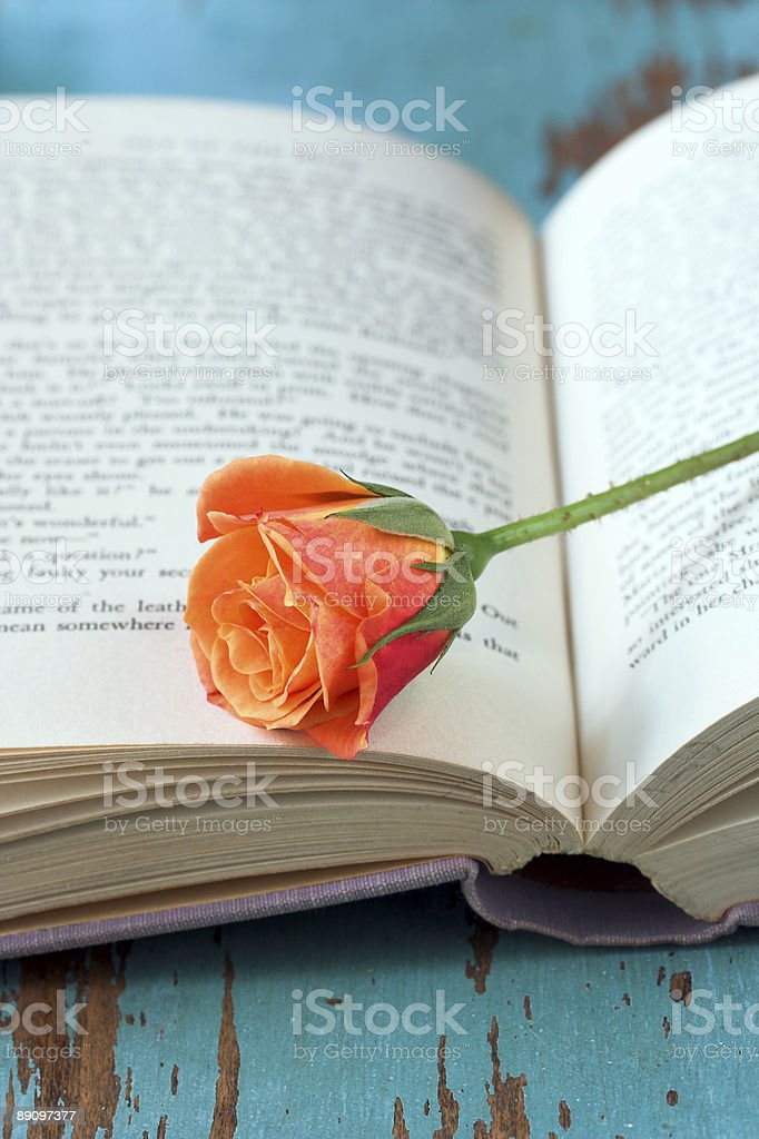 Rose on open book royalty-free stock photo