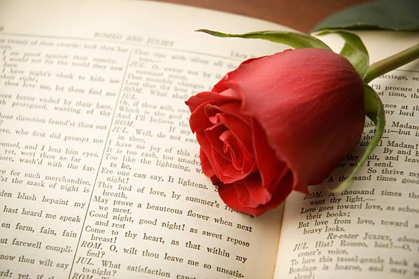 Rose on Shakespeare stock photo