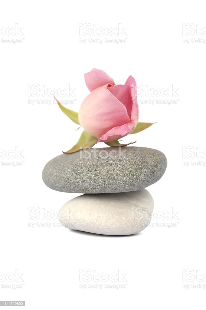 Rose on stones in balance isolated white background royalty-free stock photo
