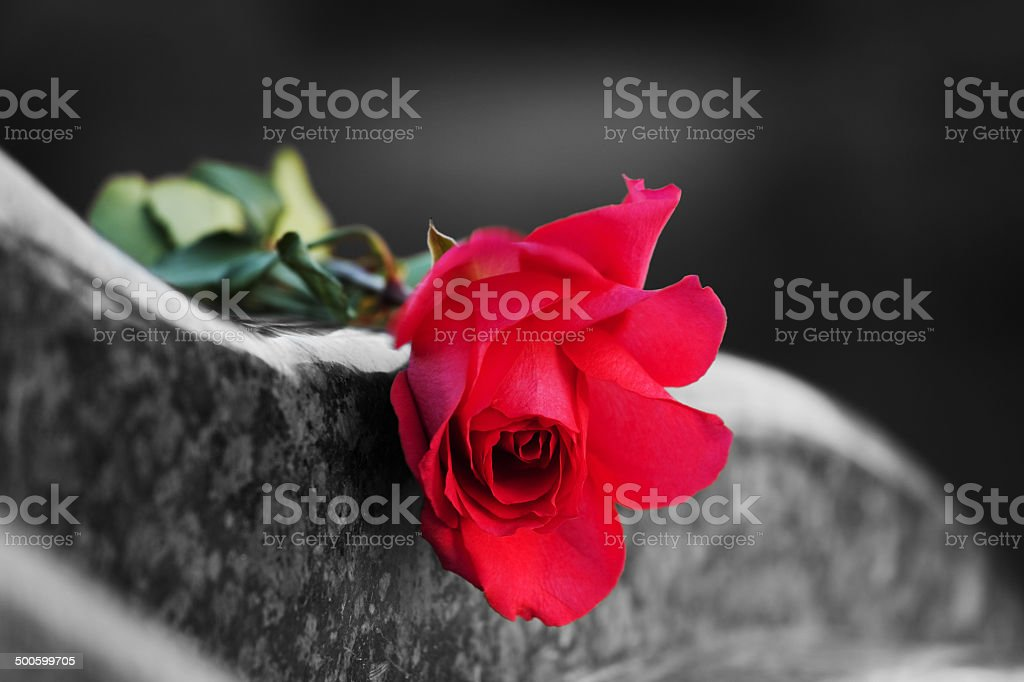 Rose on the tombstone stock photo