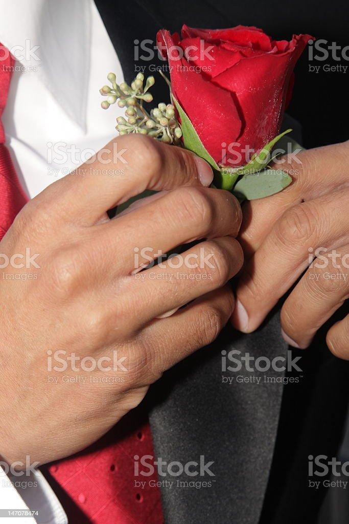 rose on tuxedo a rose being pinned on a tuxedo lapel Bridegroom Stock Photo