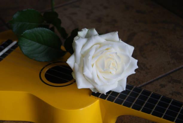 Ros på ukulele bildbanksfoto
