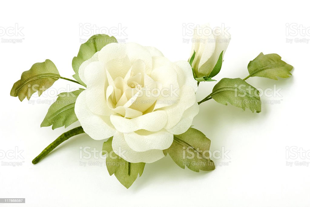 Rose on white background stock photo