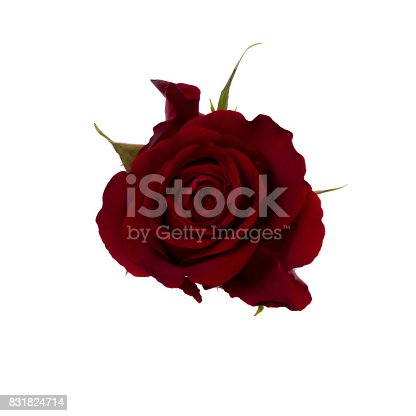 Flower on white background. Pictures for Flower store or you craft working