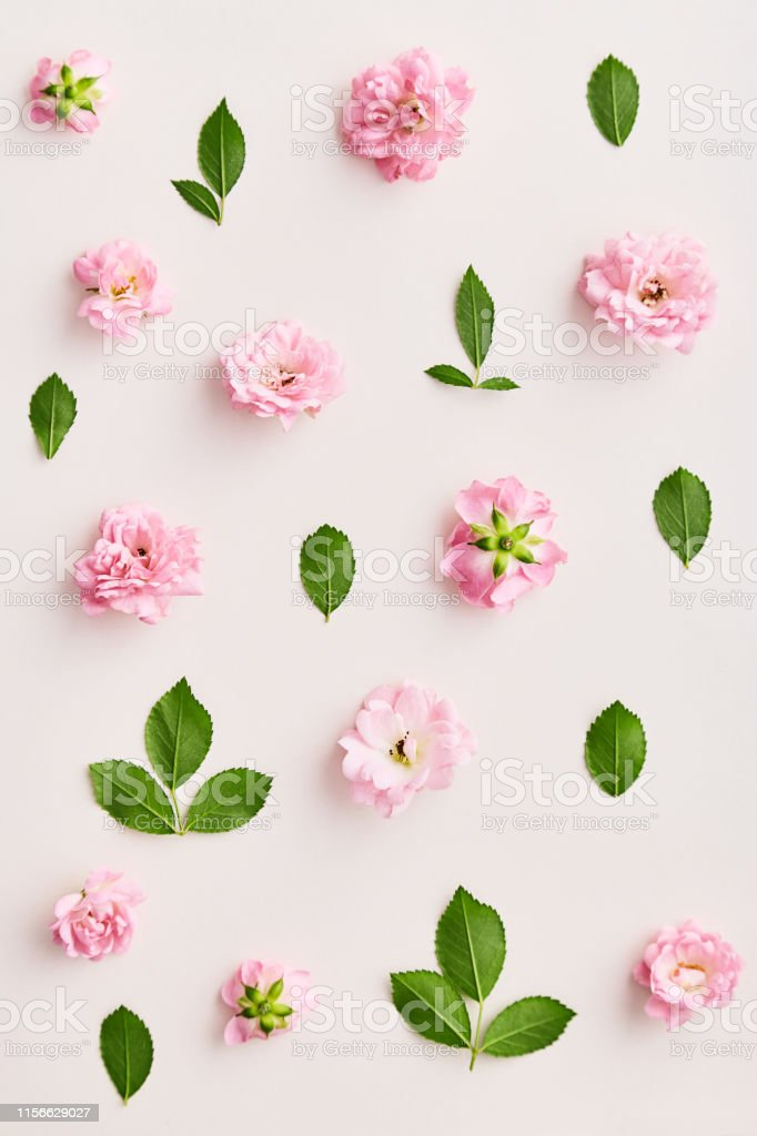 Rose pattern. Flat lay spring and summer rose flowers on a neutral...