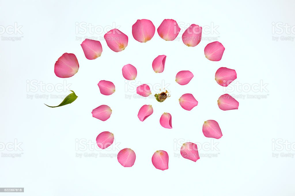 Rose peddles stock photo