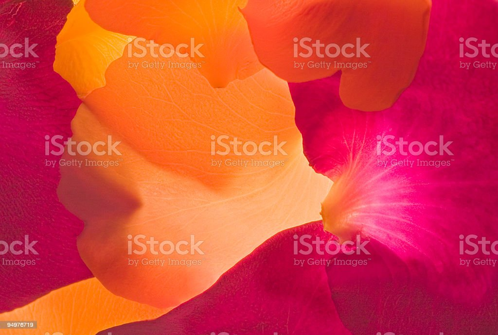 Rose Petal Abstract #2 royalty-free stock photo