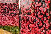 istock Rose Petal Background 1137331747
