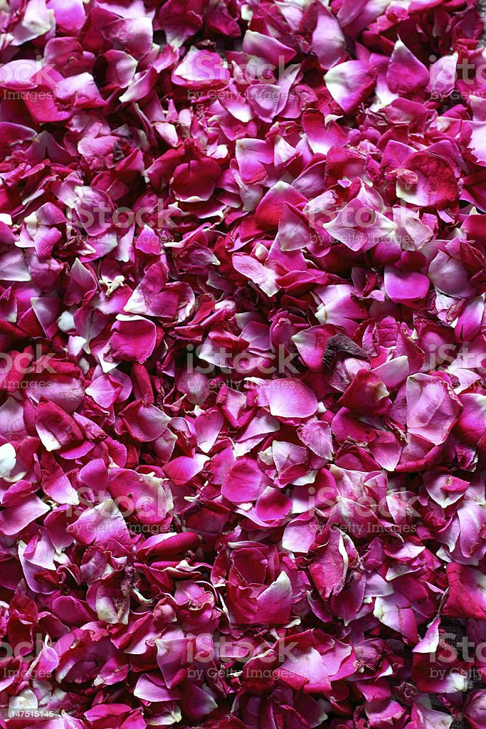 Rose Petal Background royalty-free stock photo