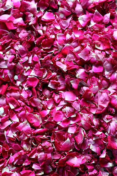 Rose Petal Background stock photo