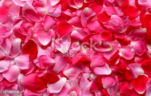 Pink and red rose petals form a colorful background.