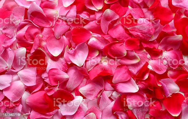 Rose petal background picture id157380719?b=1&k=6&m=157380719&s=612x612&h=pptua97if5jfly9pyriyig68 ur4r6e14cy1kwpv3vi=