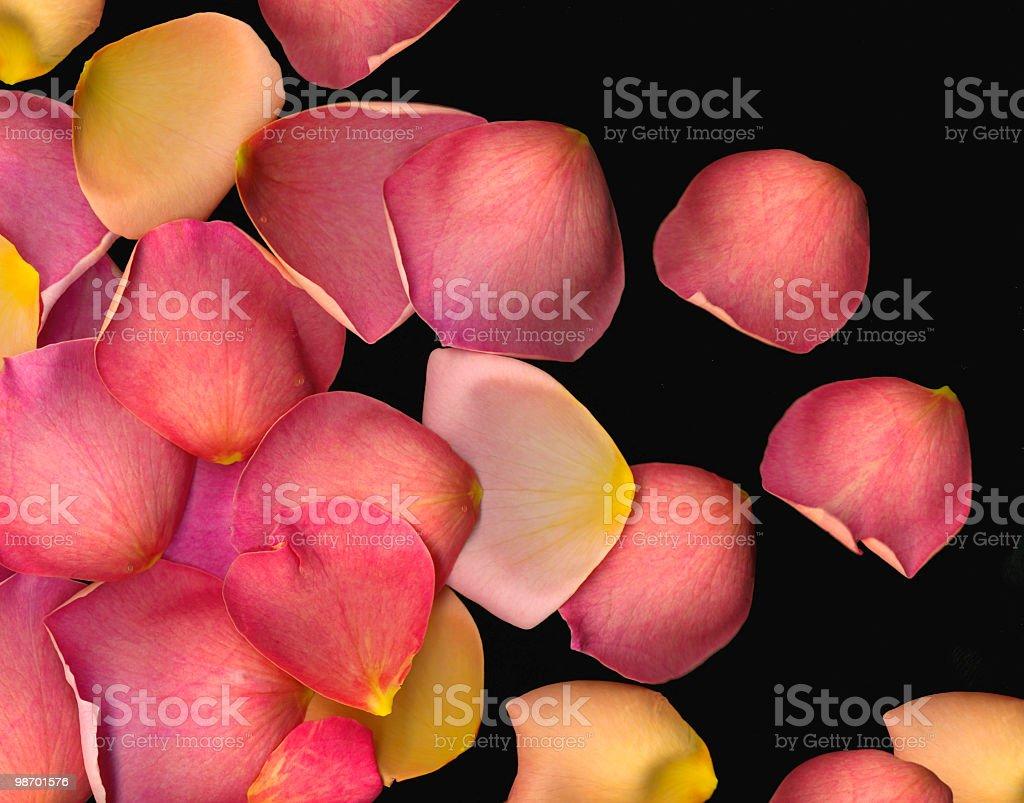 Rose petal background royalty-free stock photo