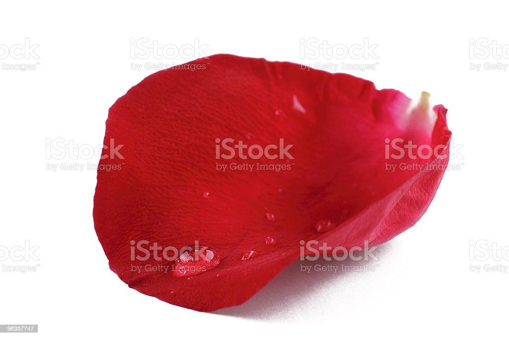 Rose petal royalty-free stock photo