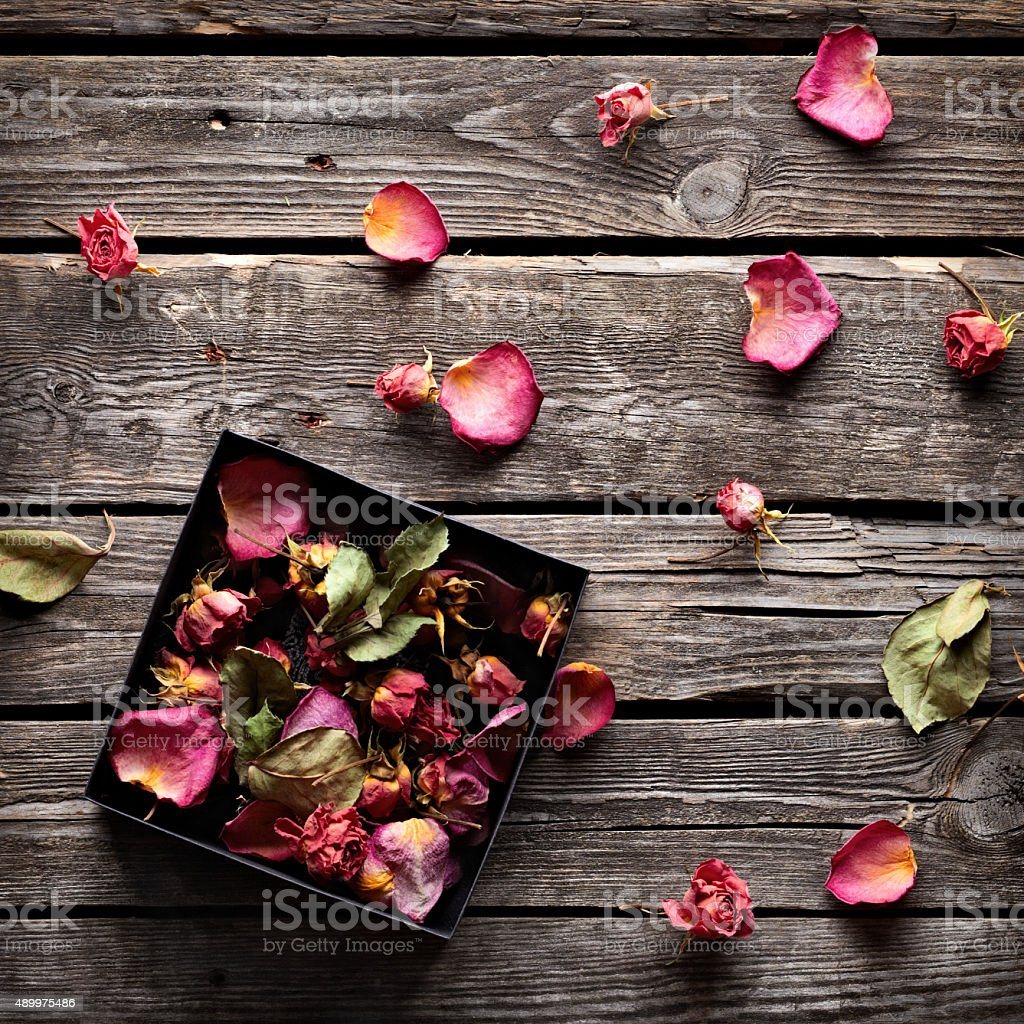 Rose petals around open gift box stock photo