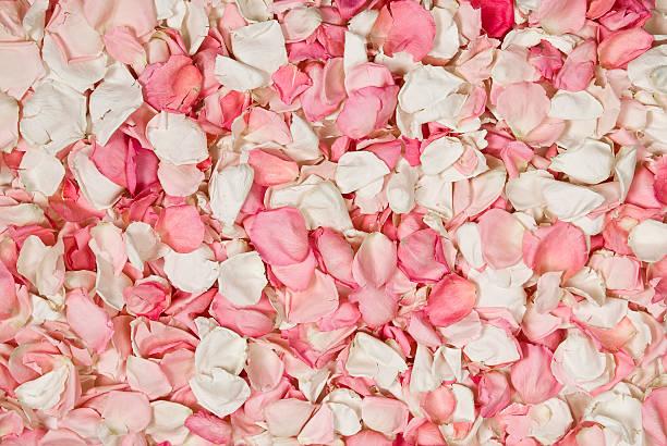 Rose petals background picture id174675380?b=1&k=6&m=174675380&s=612x612&w=0&h=kbv3dpnfzx1pvm8esvpfeprggyby 8ibwksk3ry5qtc=