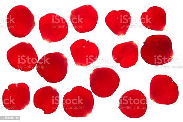 Rose petals collection isolated picture id119935249?b=1&k=6&m=119935249&s=612x612&h=idllkneqim6w3wabskjbx3xt7i8emeeyakve0oxjple=