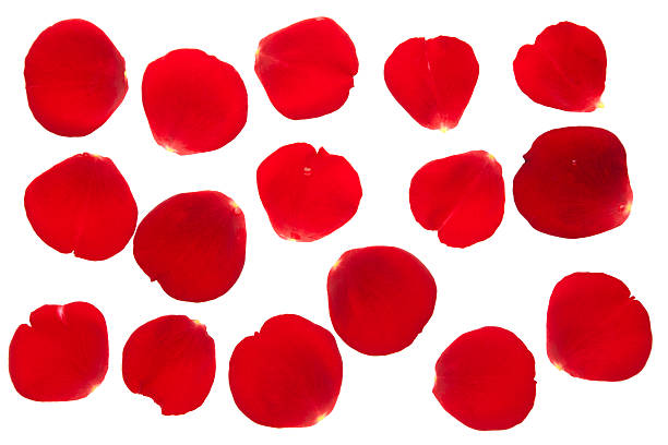 rose petals collection isolated - rose petals stock pictures, royalty-free photos & images
