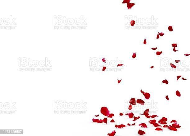 Rose petals fall beautifully on the floor picture id1173428587?b=1&k=6&m=1173428587&s=612x612&h=qdsn7u3jg  lthj8oonu4d5vtwlht0jzcnd7tnkjufc=