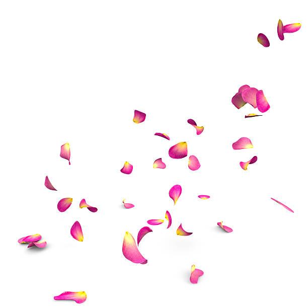 Rose petals fall to the floor picture id468970768?b=1&k=6&m=468970768&s=612x612&w=0&h=azwn4xryvdl 7vaabasbaiiqjdxrjoz68ssjaizkizc=