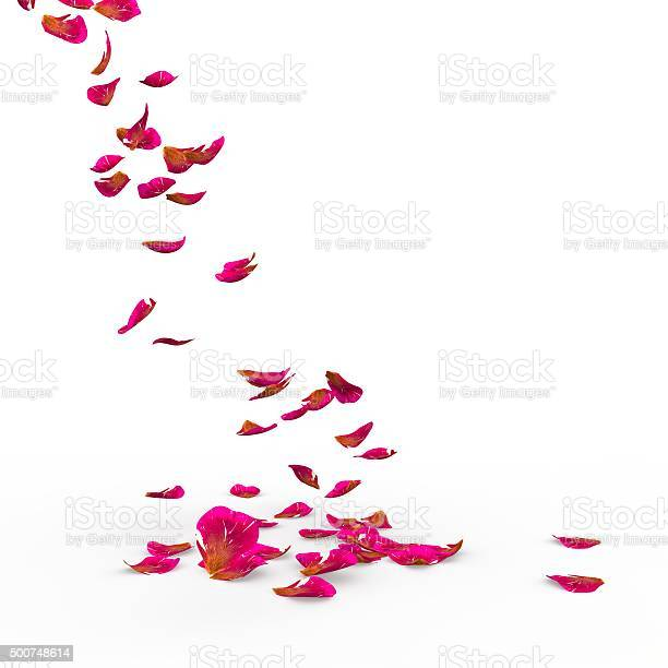 Rose petals fall to the floor picture id500748614?b=1&k=6&m=500748614&s=612x612&h= ckbgel6ukd8z1zkuxlfoypa tbplwzxwwoyvxeyveg=