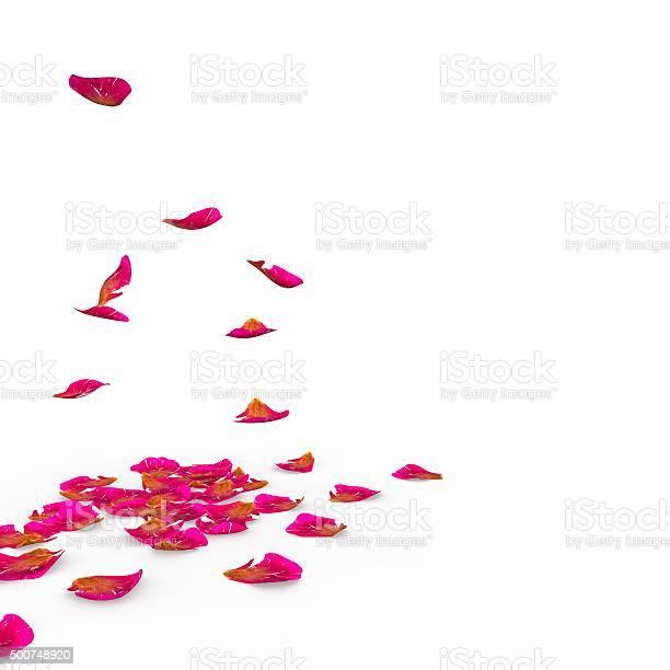 Rose petals fall to the floor picture id500748920?b=1&k=6&m=500748920&s=612x612&h=fowgejcqzmaxj 1jlzbl0cfq3ywg9nxv zjy0 dsrwq=