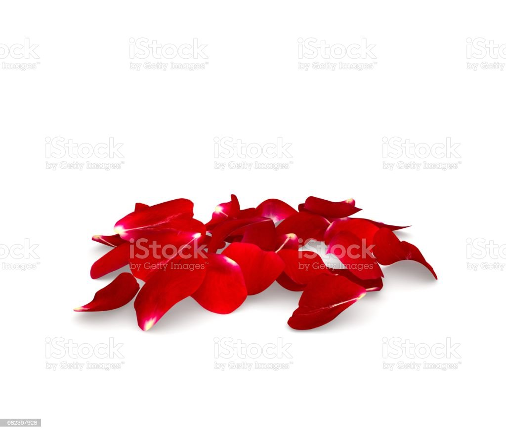 Rose petals fall to the floor foto de stock libre de derechos