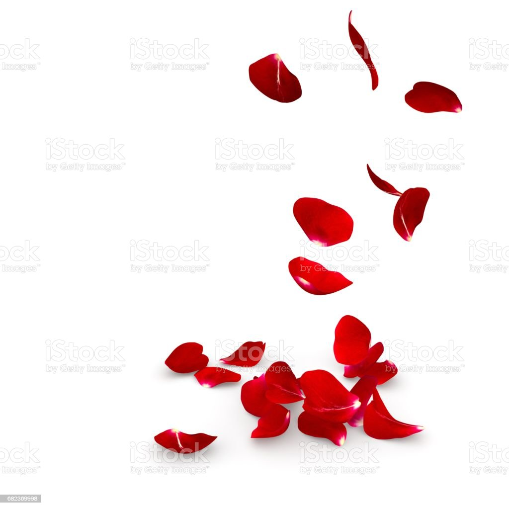 Rose petals fall to the floor royaltyfri bildbanksbilder