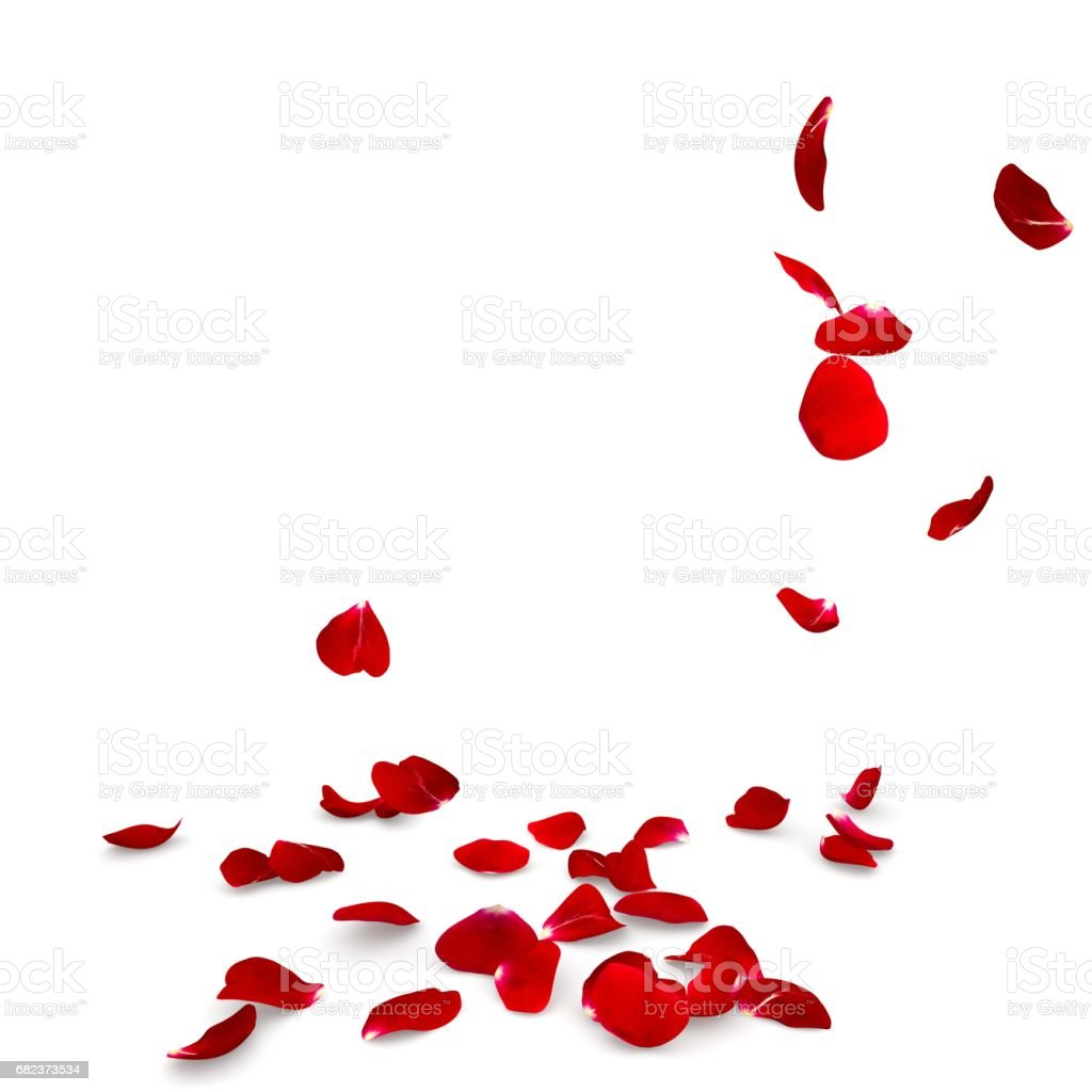 Rose petals fall to the floor royalty free stockfoto