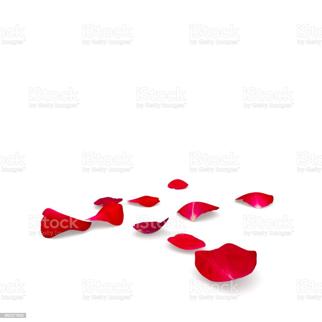 Rose petals fall to the floor royaltyfri bildbanksbilder
