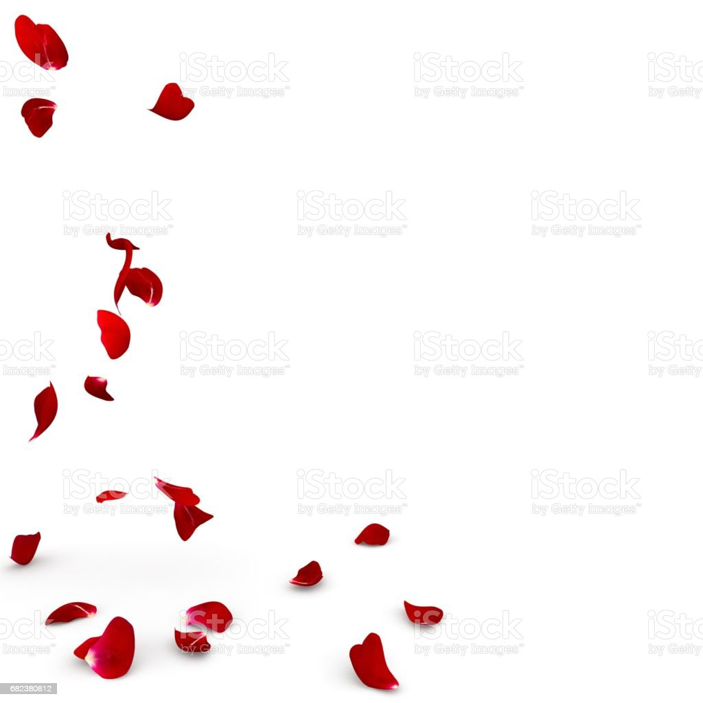 Rose petals fall to the floor photo libre de droits