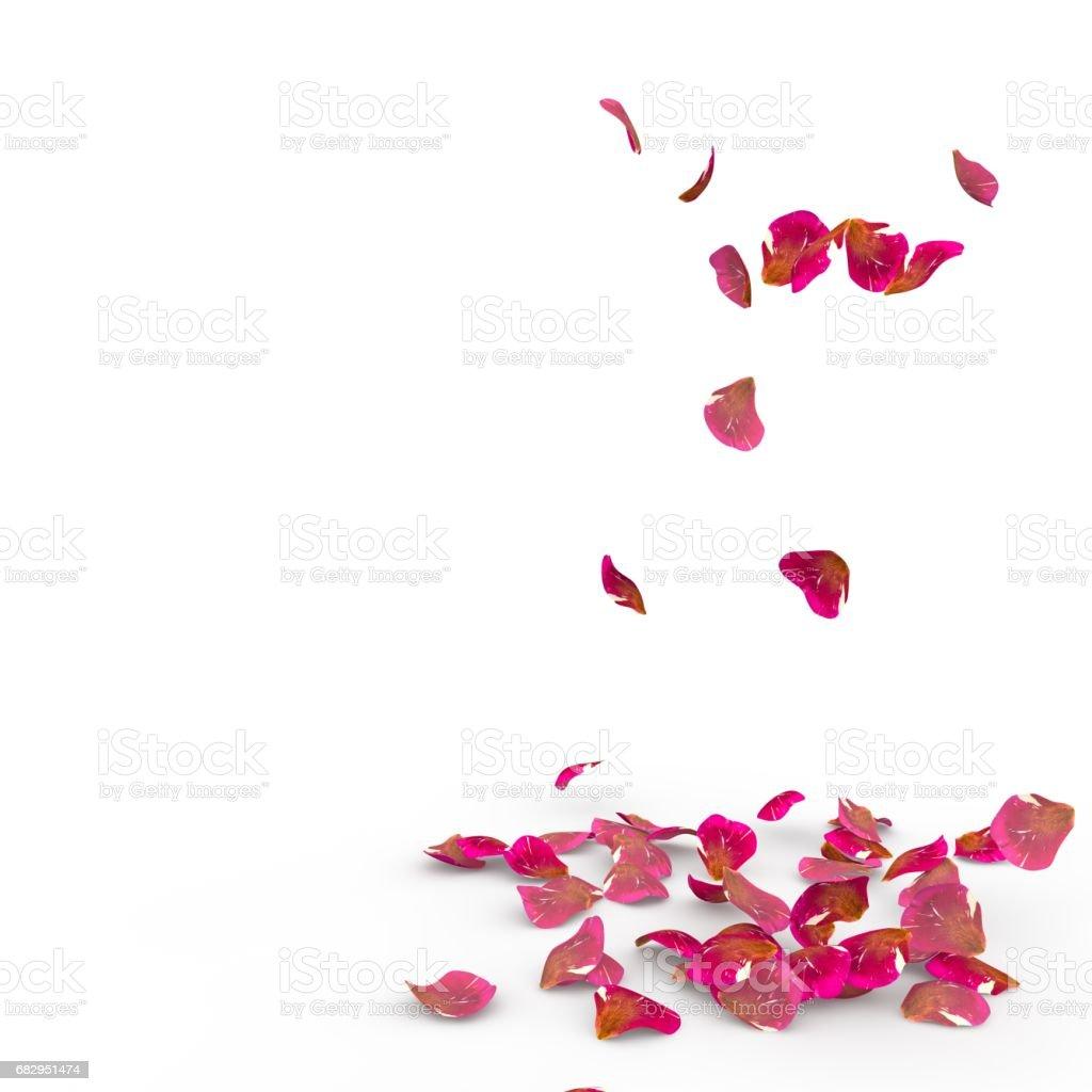 Rose petals fall to the floor foto de stock libre de derechos