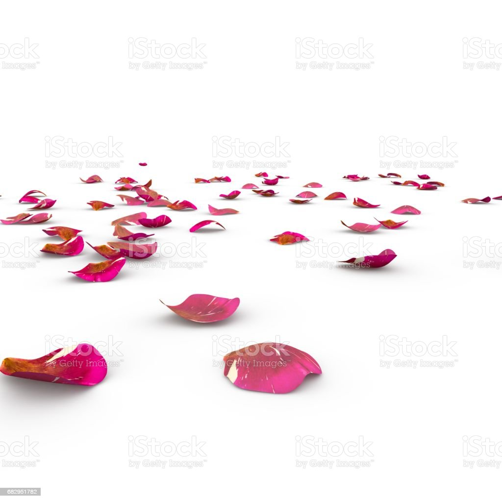 Rose petals fall to the floor royalty-free stock photo
