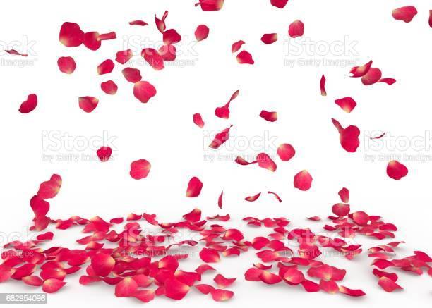 Rose petals fall to the floor picture id682954096?b=1&k=6&m=682954096&s=612x612&h=g2bbg2mg1sm8syfdxu ydhibonqiuvq0lreq7i9wgj4=