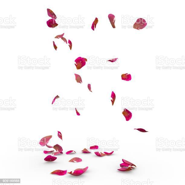 Rose petals fall to the floor picture id926189588?b=1&k=6&m=926189588&s=612x612&h=fh8vgdd8p1cs77fp60e0br5fohkiocycrrppoqawyg4=